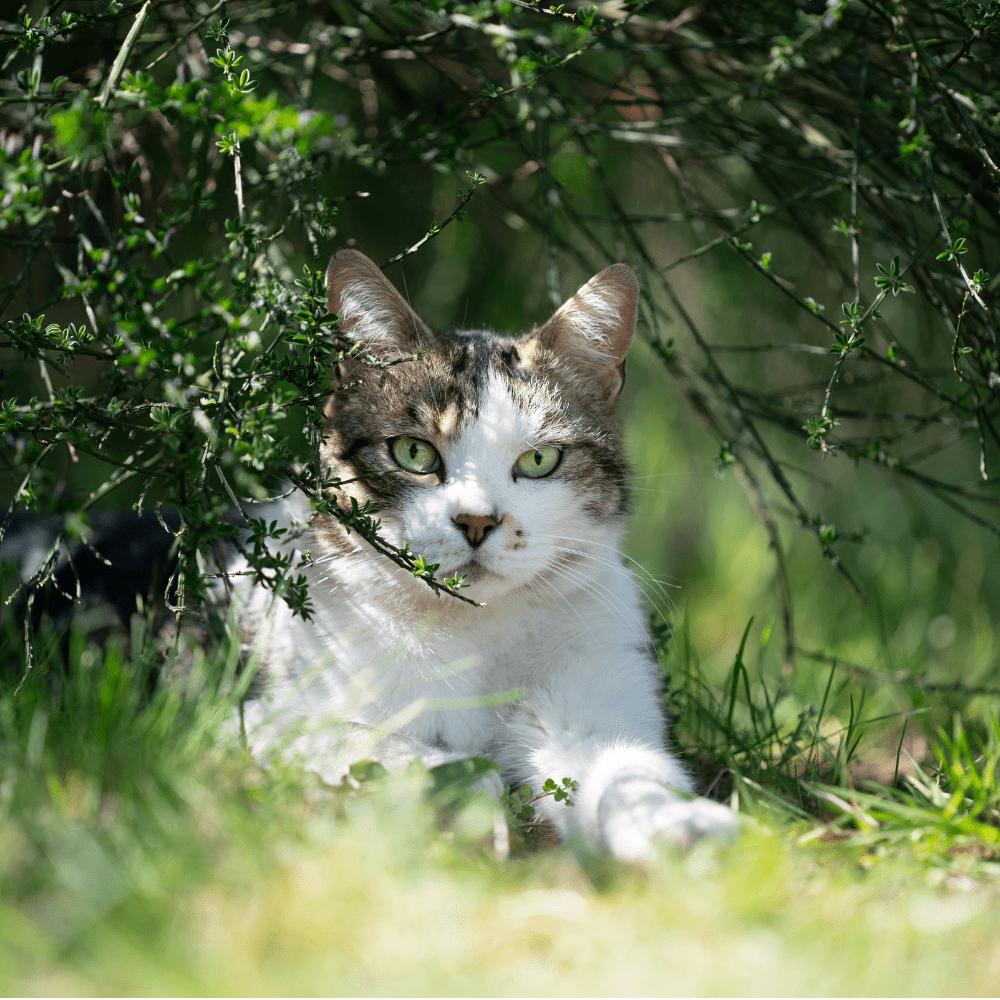 Katze, Ernährung, Beratung, Fütterung