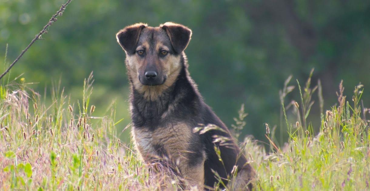 Hund Ernährungsberatung , Fütterung, Ernährung