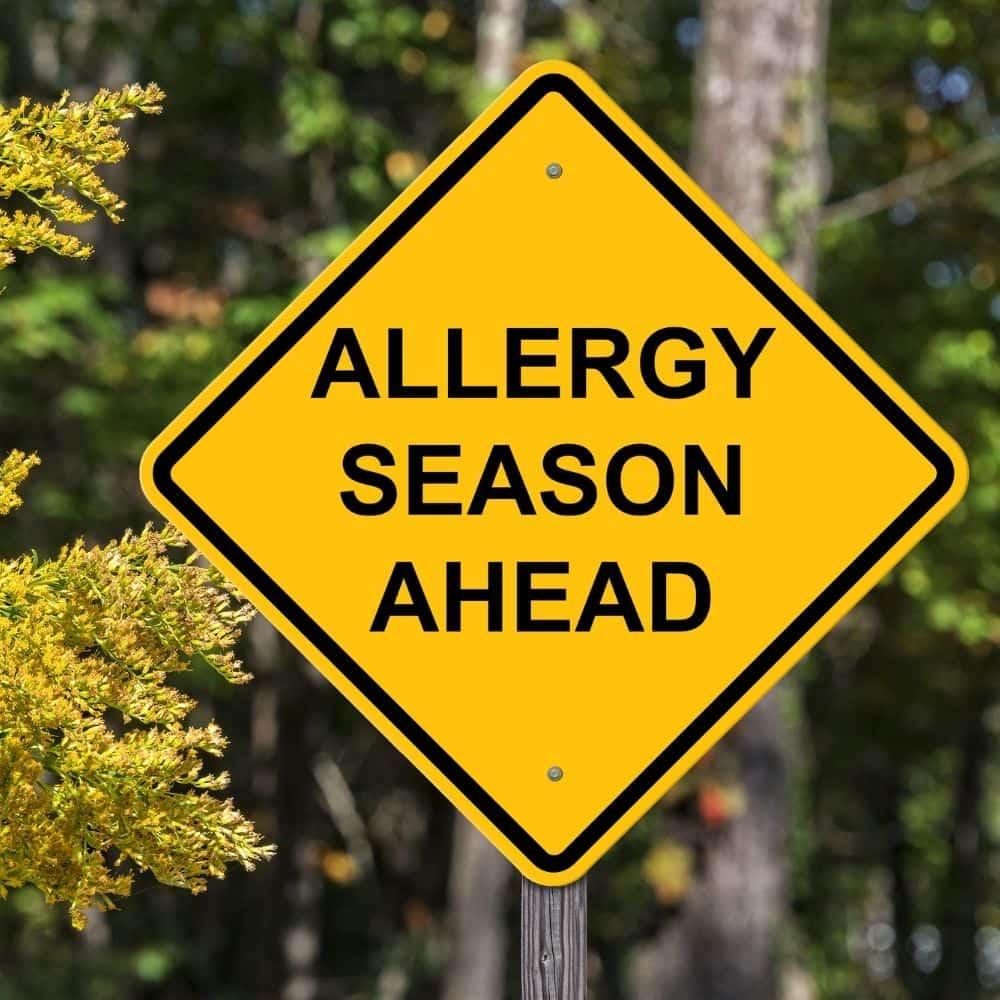 Allergie Histamin Hund Katze